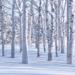 ナチュラルビューティースタイル展お勧め白樺の樹液